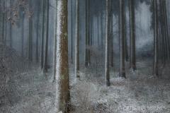 IMG_2321 Kopie 2 Böttigen Wald