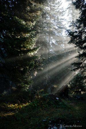 ...ohne Höhengewinn durch den Wald